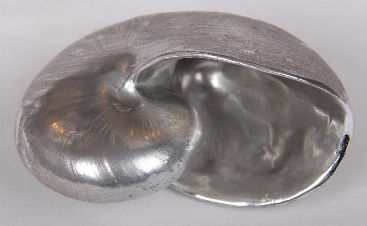 Afbeelding van Decoratieve schelpen